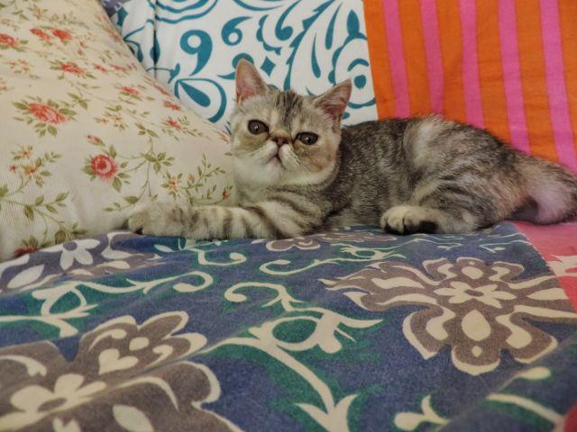 寵物相片 4