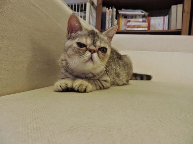 寵物相片 9