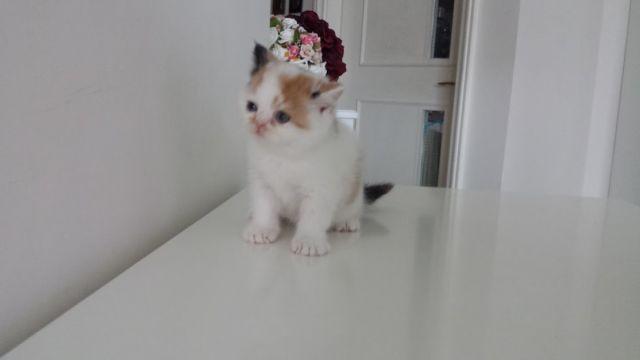 寵物相片 5