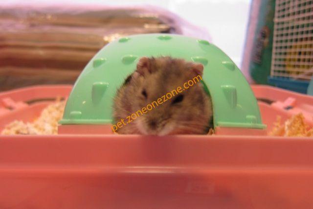 鼠类野生动物图片和名称