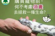 購買寵物前,何不考慮領養去拯救一條生命?