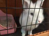 猫猫兔待领养