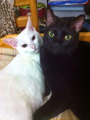- 希望能同時收養 兩貓感情十分好