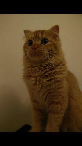 寵物相片 2