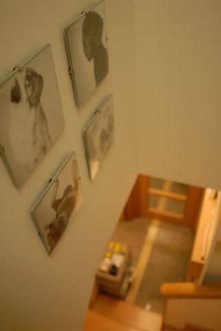 天后寵物醫院 Tin Hau Pet Hospital -