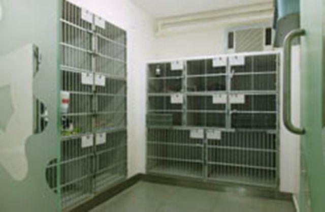 大圍珍禽異獸及寵物醫院 Tai Wai Small Animal & Exotic Hospital -