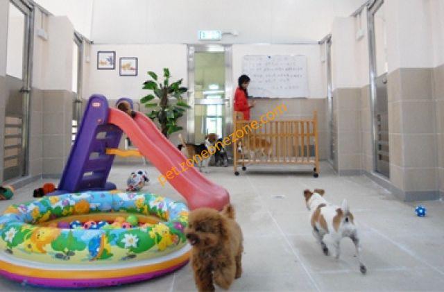 寵物樂園 Pet World -