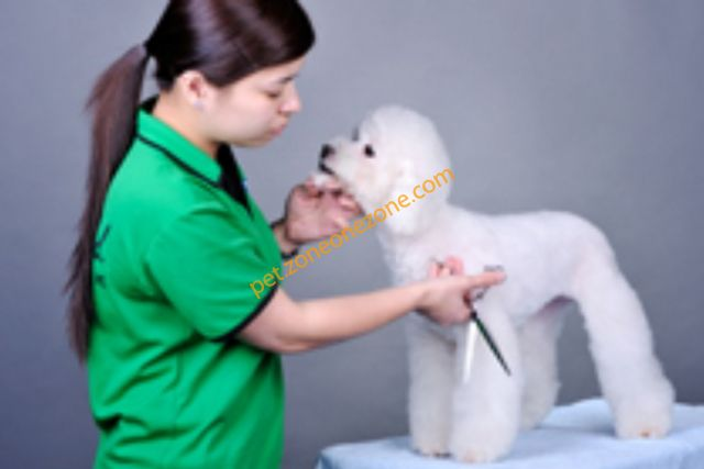 Pet Field 寵物新天地 (香港狗公園) -