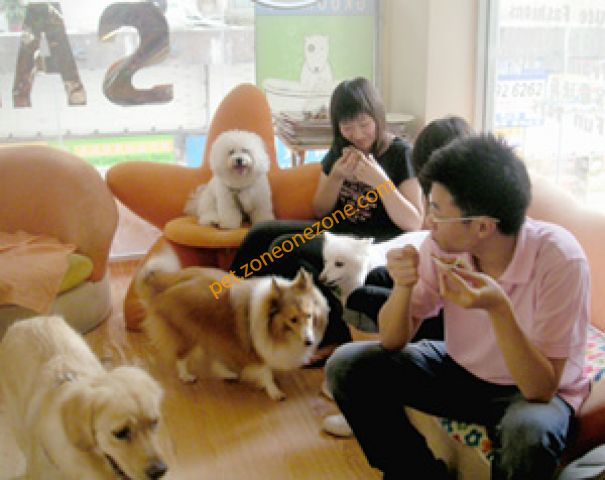 狗狗地寵物店 Dog Dog Day Pet Shop -